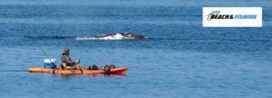 3 ocean fishing kayaks - header