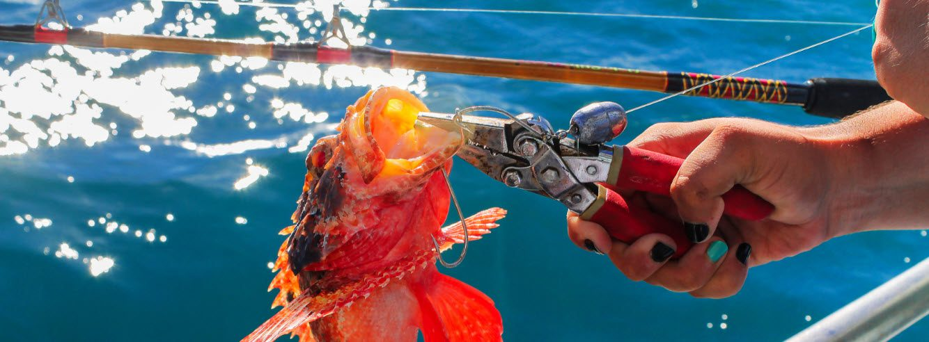 tools for surf fishing - pliers