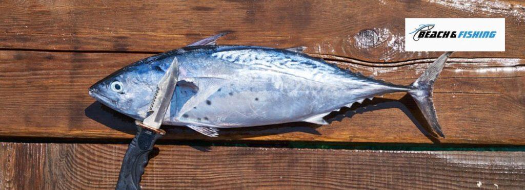 Best Fishing Knives - header