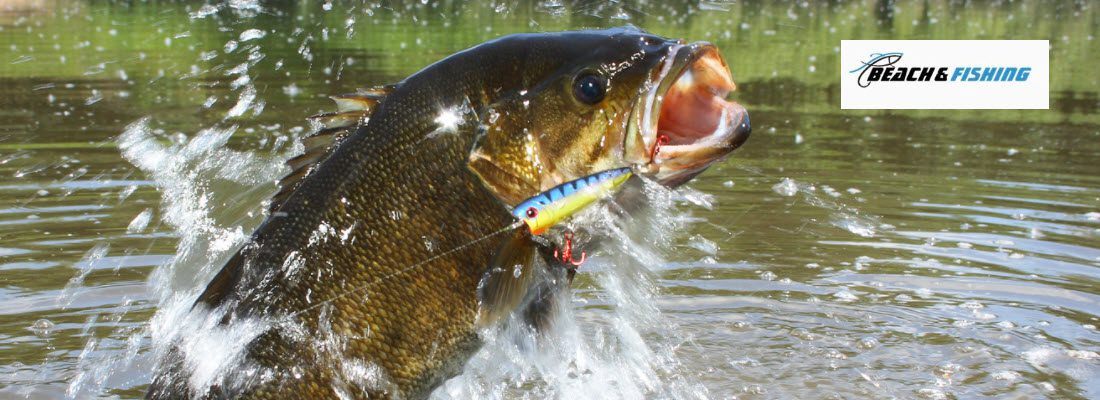Smallmouth Bass Fishing Tips - Header