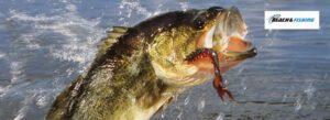 largemouth bass fishing tips - header