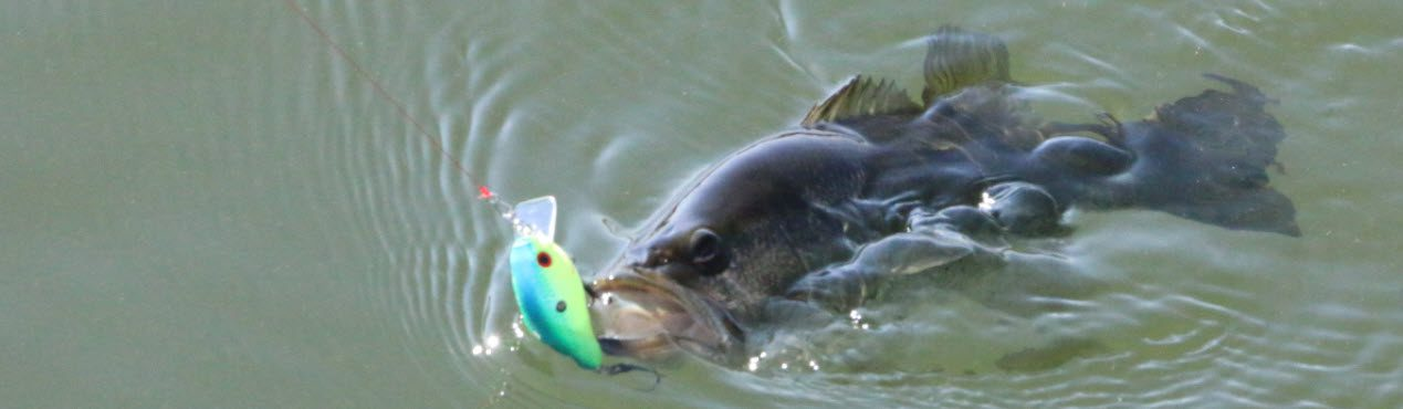 largemouth bass fishing tips - Bass with lure