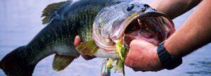 largemouth bass fishing tips - Largemouth Bass