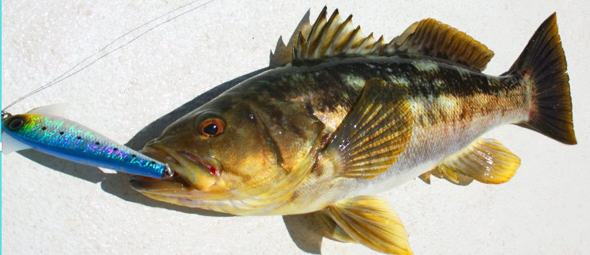 lures for smallmouth bass - smallmouth with lure