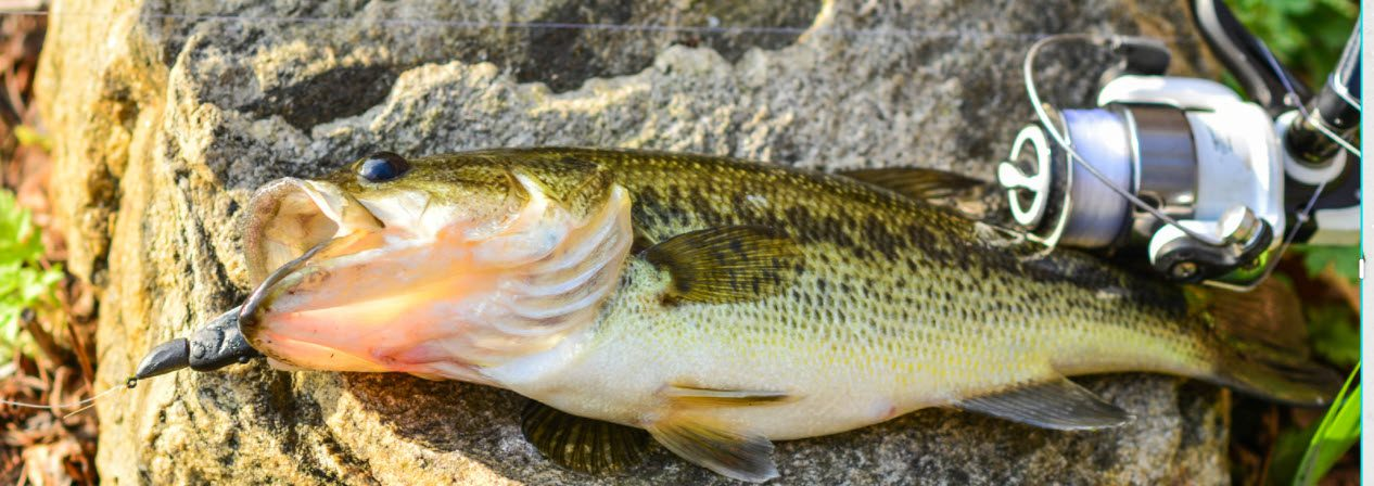 lures for smallmouth bass - smallmouth with soft plastic