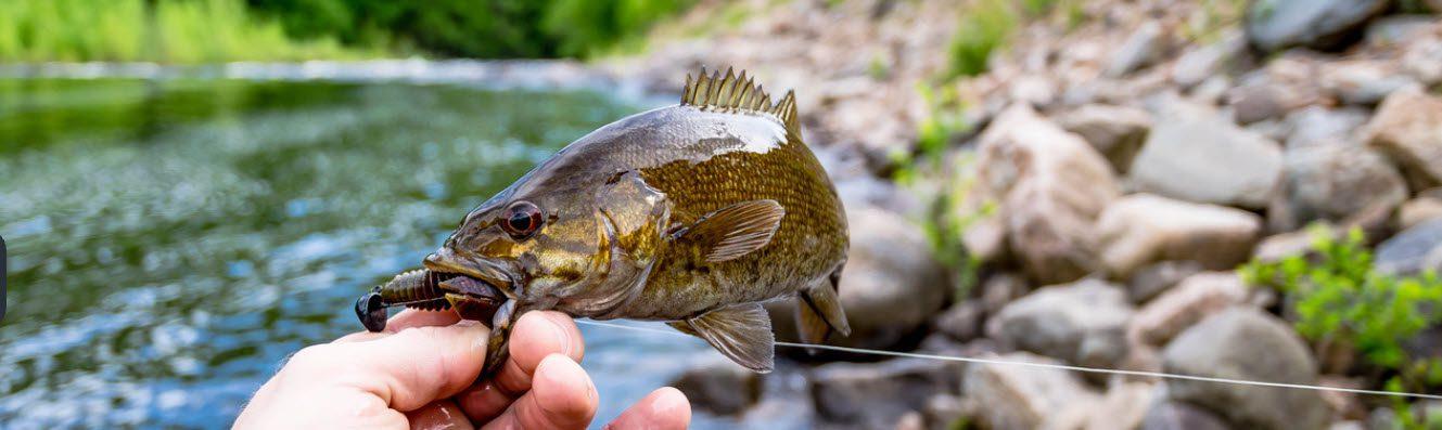 can you eat smallmouth bass - smallmouth bass